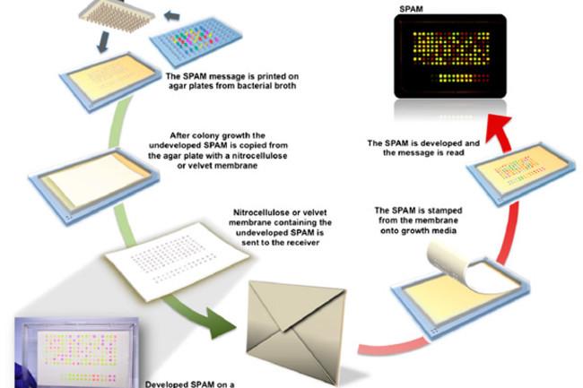 SPAM-method.jpg