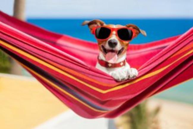 Dog Beach Hammock - Shutterstock