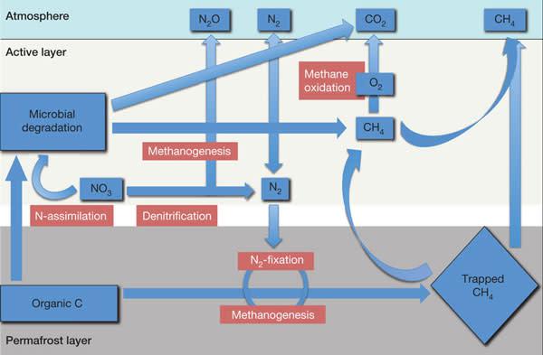microbialpermafrost.jpg