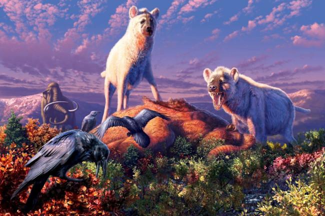 Chasmaporthetes Arctic hyena - Julius T. Csotonyi