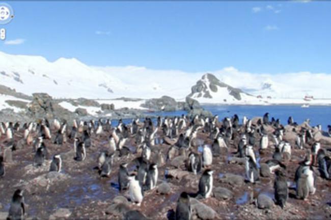 penguins-latlong.jpg