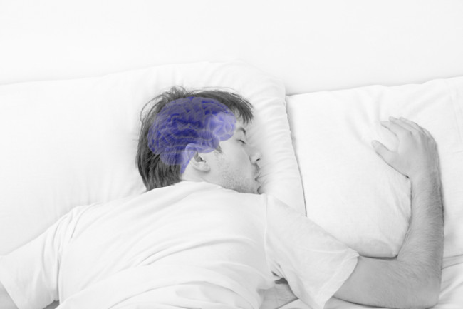 sleep, brain