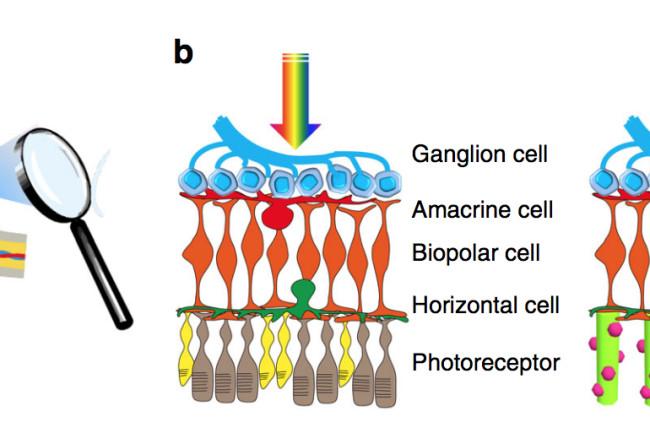 retina nanowire Screen-Shot-2018-03-06-at-2.40.53-PM