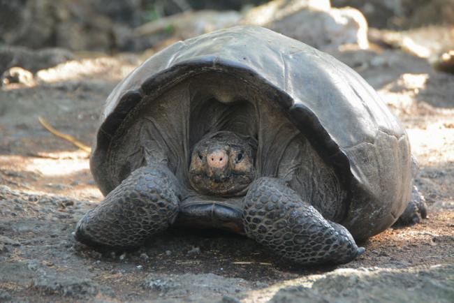 Fernandina Island Galapagos National Park Directorate - GTRI