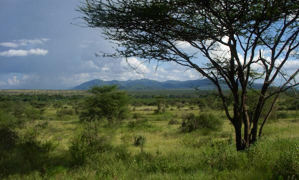 savanna-wider.png