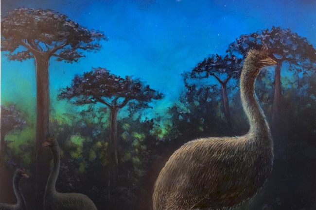 Elephant Birds Biggest Ever Were Creatures Of The Night Discover Magazine