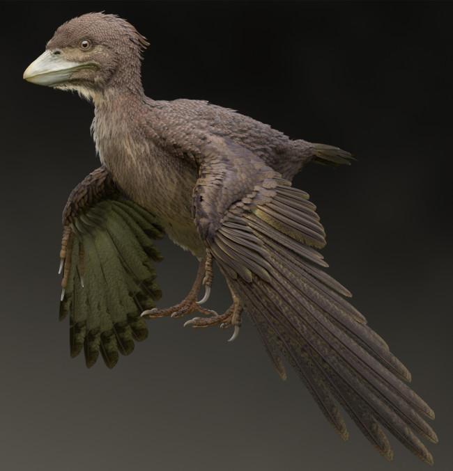 Life restoration of Fukuipteryx prima (1)