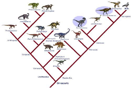 cladogramDino.jpg