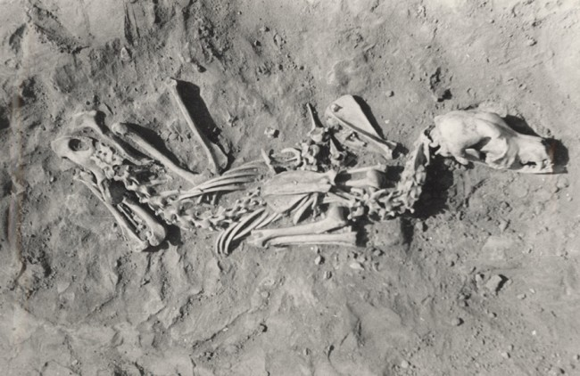 Cis-Baikal, Siberia, dogs buried with humans - PLOS ONE