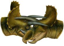 triceratops-fight.jpg