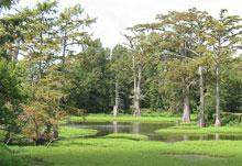 yazoo-wetlands.jpg