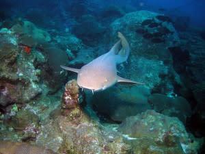 shark-top-300x225.jpg