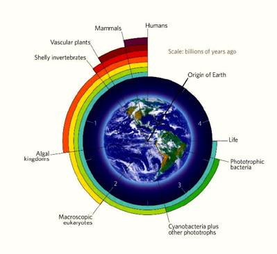 life%20scale%20400.jpg