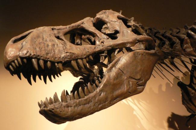 T. rex Tyrannosaurus - Wikimedia Commons