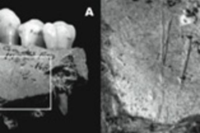 neanderthal-jawbone.jpg