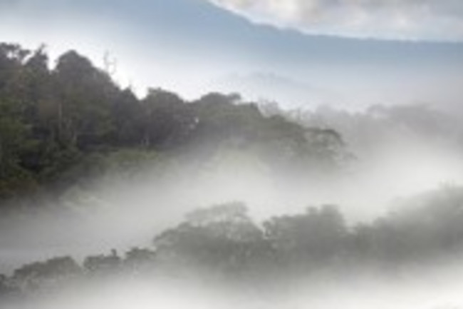 rainforest-187x300.jpg