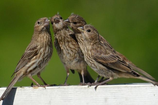 singing-friends1.jpg