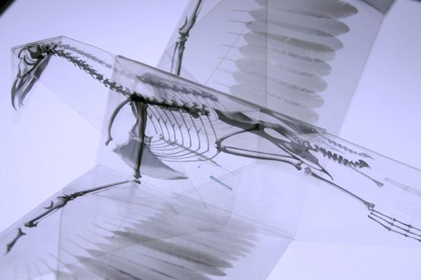 xray_origami.jpg