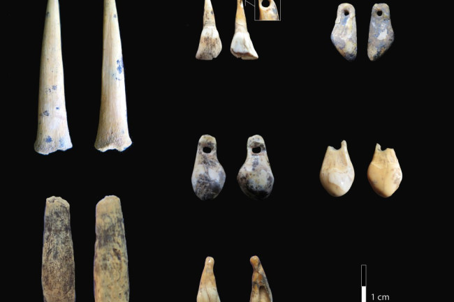 Bone points and pierced teeth from the early Upper Palaeolithic layers of Denisova Cave sampled for radiocarbon dating Credit: Katerina Douka