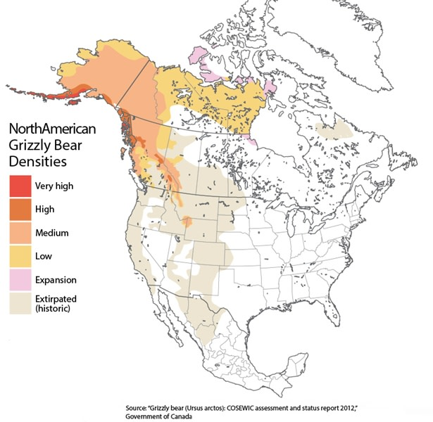 Bears In California Map Grizzly Bears Might Return to California. Is the State Ready
