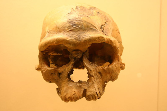 The traditional story of human migration out of Africa to points north and east has been on shaky ground for years. Researchers in a new Science paper are finally calling for a revision. (Archaic Homo sapiens photographed at the Smithsonian Museum of Natural History, Credit Ryan Somma/Wikimedia Commons)
