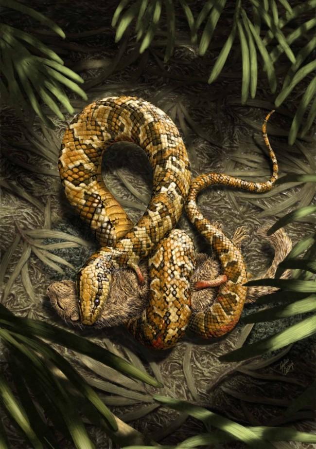 Julius Cstonyi Tetrapodophis amplectus