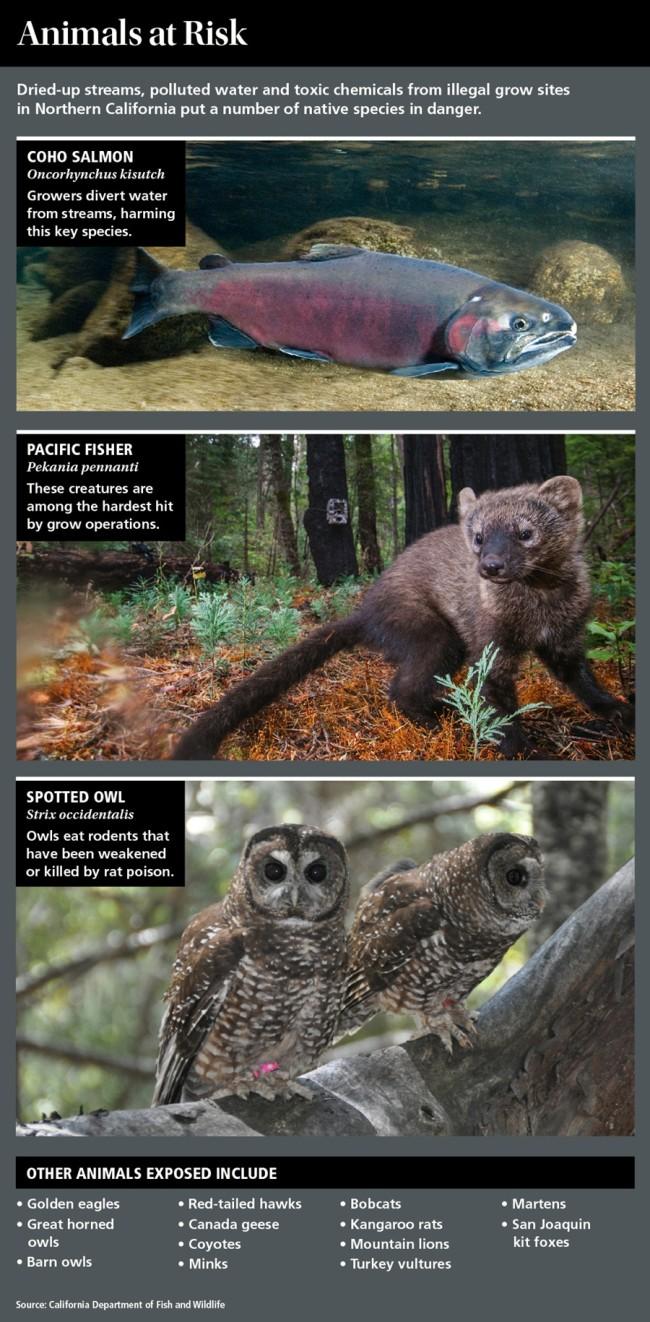 animals-at-risk