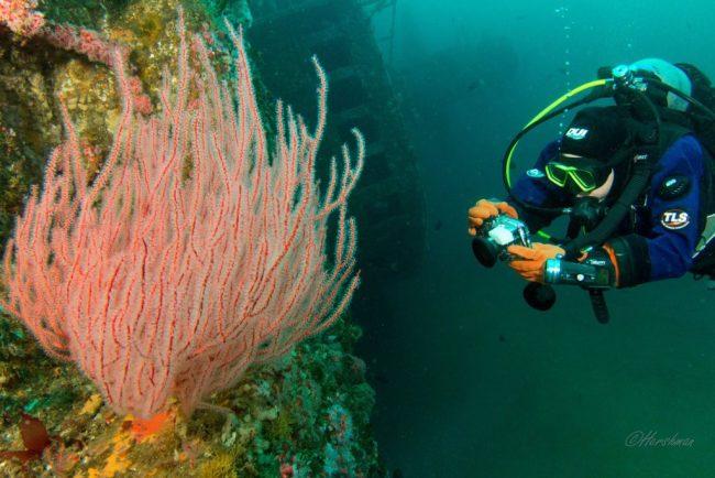 Scuba Diver - Dave Hershman