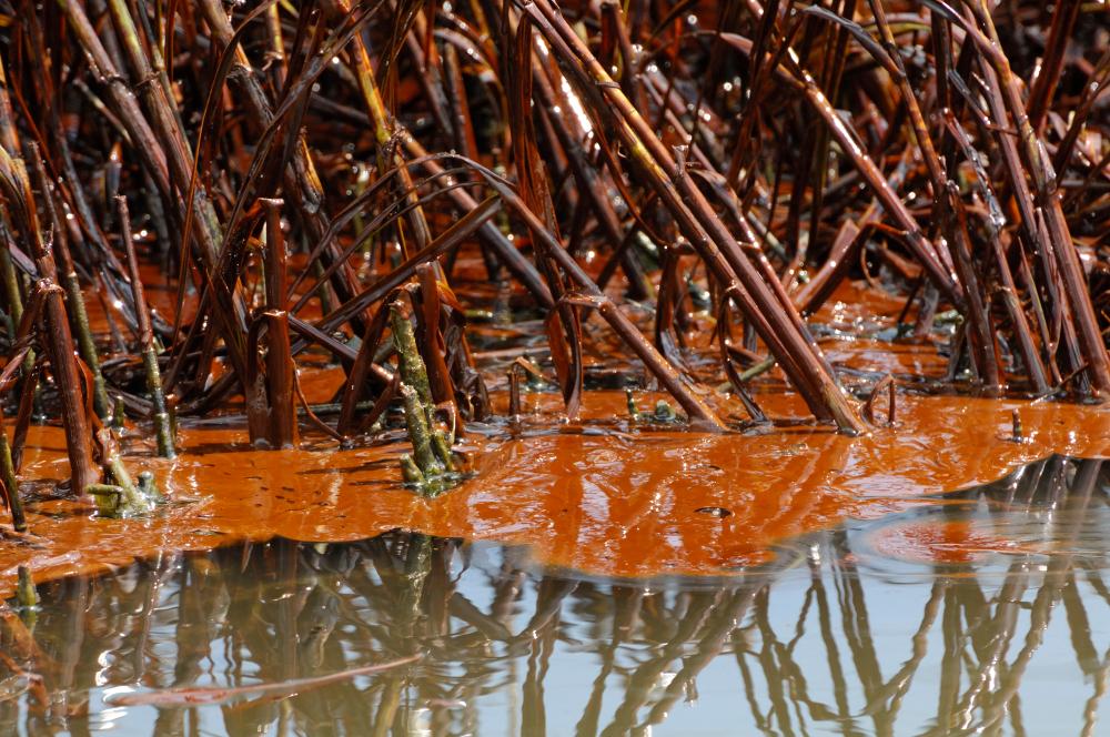 crude_oil_marsh_grassshutterstock_779830342.jpg