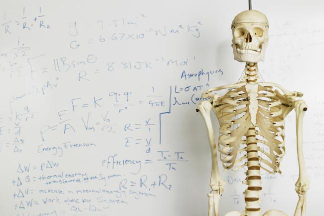 diagram of male skeleton darwin s rib discover magazine  darwin s rib discover magazine