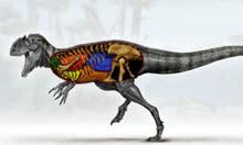 dinosaur-bird-lungs.jpg