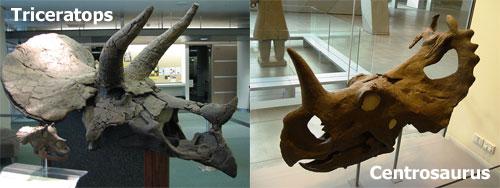 Two-skulls.jpg
