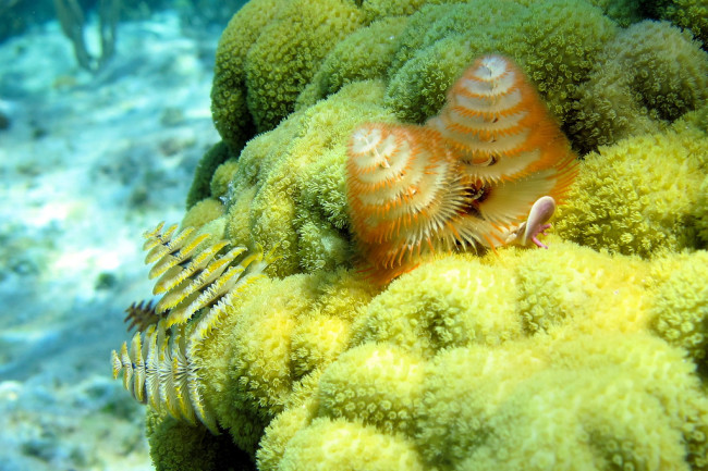 mustard-hill-coral.jpg
