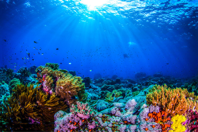 coral - shutterstock 1044142510
