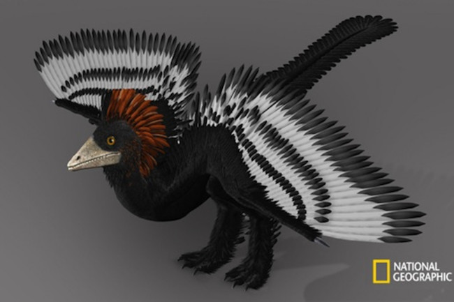 anchiornis-illustration.jpg