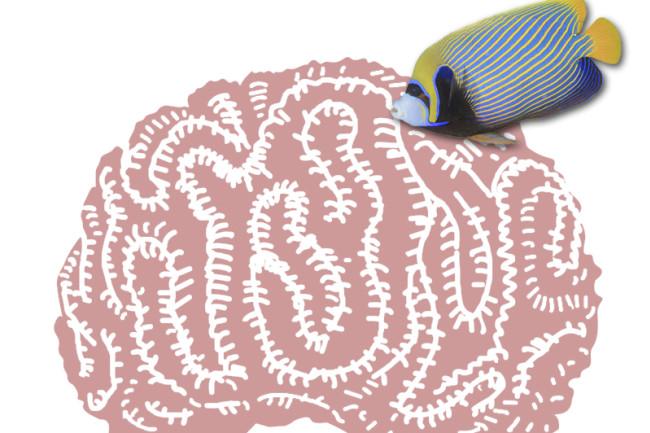 fish-brain