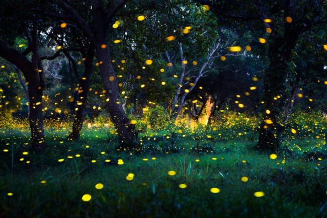 Fireflies - Shutterstock