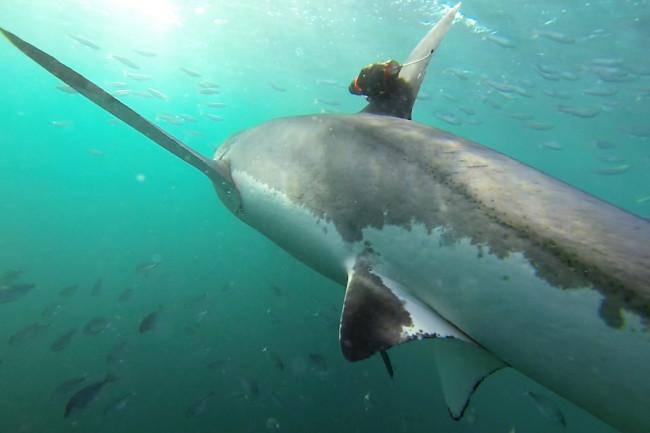 Shark-Cam-1024x721