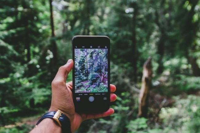 treesnappic.jpg
