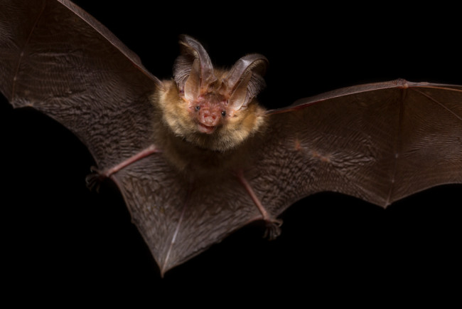 bat hunting