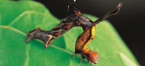 caterpillar-300x136.jpg