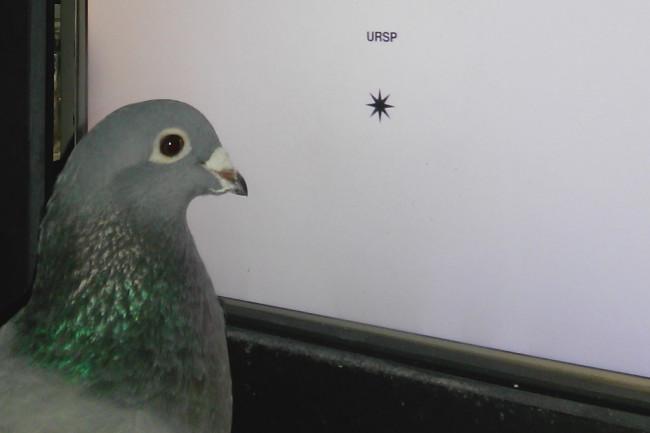 pigeon-cropped-1024x795.jpg