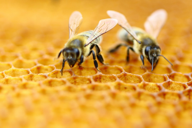 Not Only Can Honeybees Count, They Can Also Do Math | Discover ...