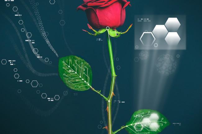 cyborg-rose.jpg