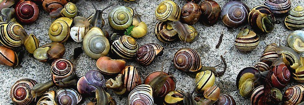 snails-cropped.jpg