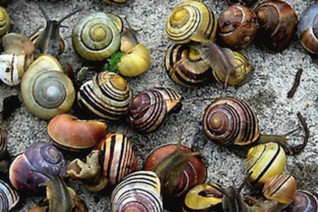 snails-cropped.jpg