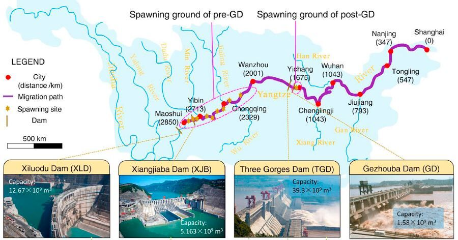 Yangtze Dams - Huang & Wang/Current Biology