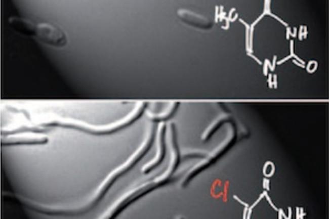 chlorine-ecoli.jpg