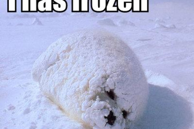 i-has-frozen.jpg