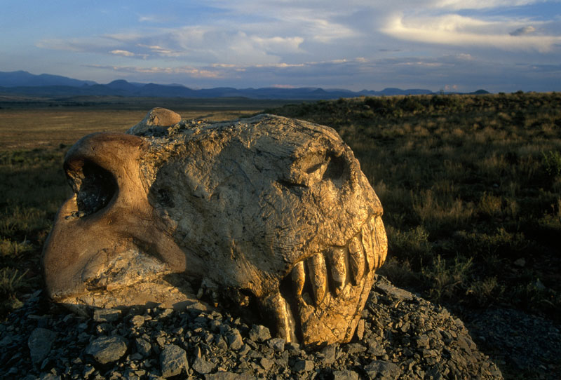 The Five Mass Extinctions That Have Swept Our Planet